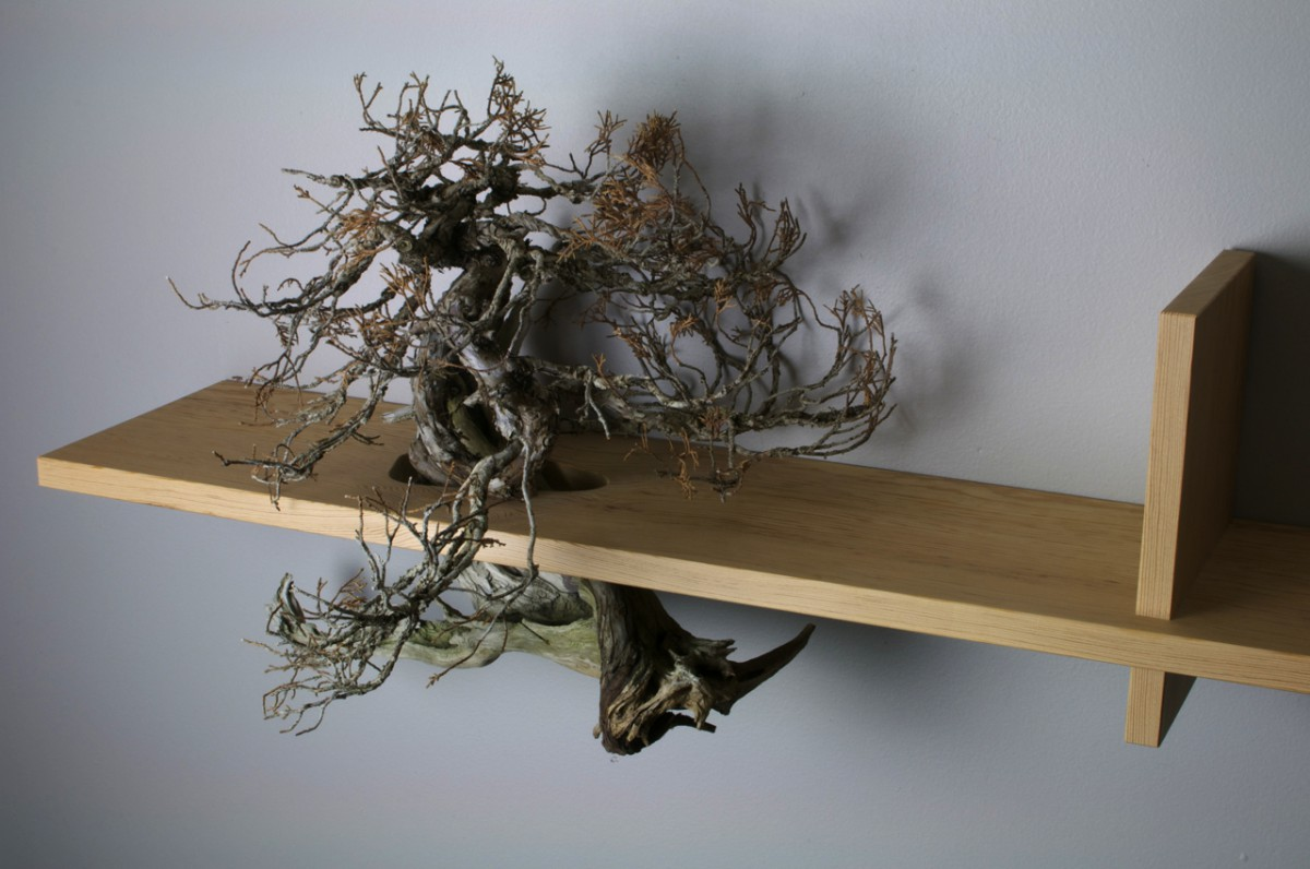A bonsai tree in a bookshelf